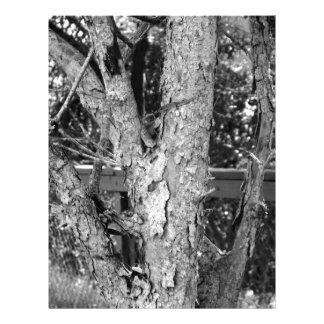Black and White Tree Nature Photo Letterhead