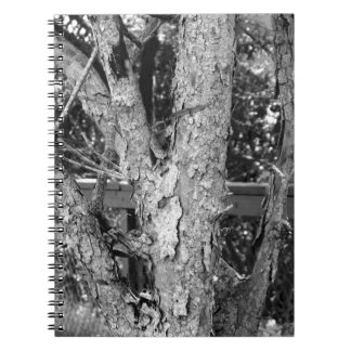 Black and White Tree Nature Photo Notebooks