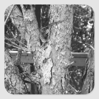 Black and White Tree Nature Photo Square Sticker