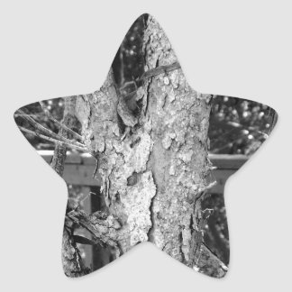 Black and White Tree Nature Photo Star Sticker