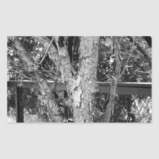 Black and White Tree Nature Photo Sticker