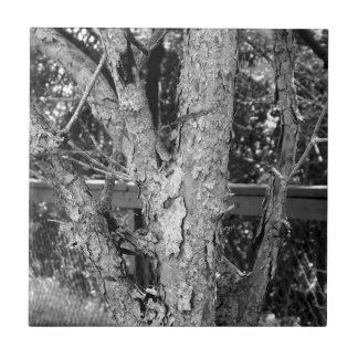 Black and White Tree Nature Photo Tile