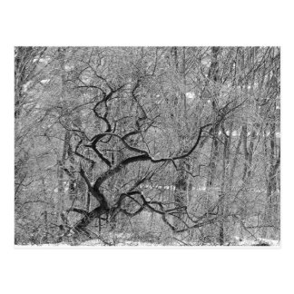 black and white tree postcard