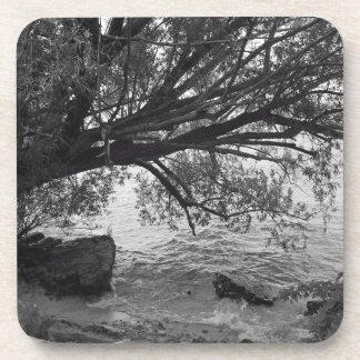 Black and White Tree Silhouette Coasters