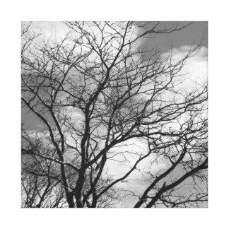 Black and White Tree - Square Photo Canvas #1