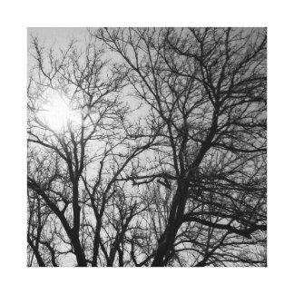 Black and White Tree - Square Photo Canvas #2
