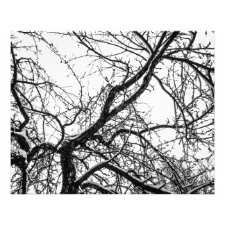 Black and white, trees and snow photograph