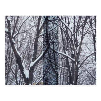 Black and white, trees and snow postcard
