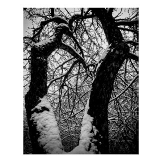 Black and white, trees and snow poster