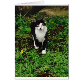 Black and white tuxedo cat in the green grass card