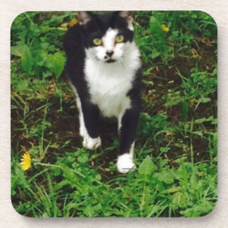 Black and white tuxedo cat in the green grass coaster