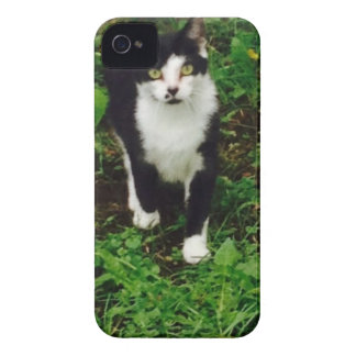 Black and white tuxedo cat in the green grass iPhone 4 cover