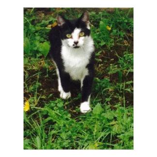 Black and white tuxedo cat in the green grass letterhead design