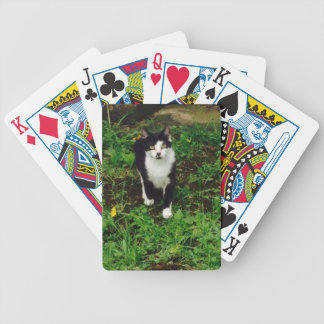 Black and white tuxedo cat in the green grass poker deck