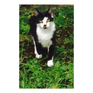 Black and white tuxedo cat in the green grass stationery paper