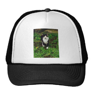 Black and white tuxedo cat in the green grass trucker hat