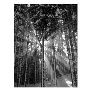 Black and White Winter Wonderland Postcard
