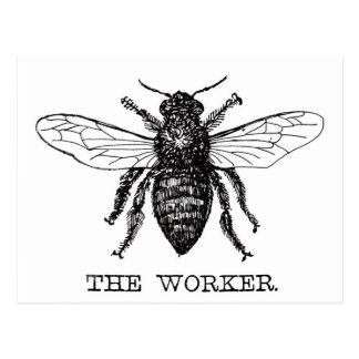 Black and White Worker Bee Vintage Postcard