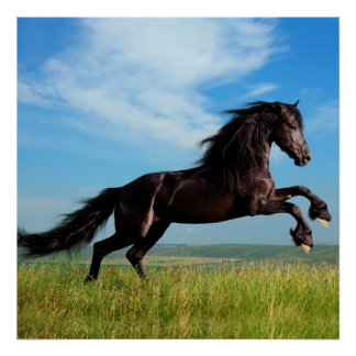 black and wild Stallion Rearing Horse Poster