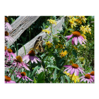 Black and Yellow Butterfly and Daisies Poster