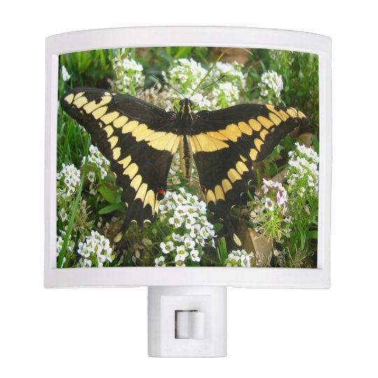 Black and Yellow Swallowtail Butterfly Night Lite