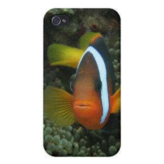 Black Anemonefish (Amphiprion melanopus) in Covers For iPhone 4