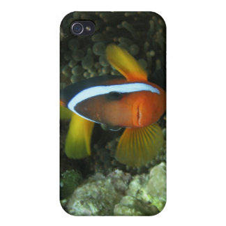 Black Anemonefish (Amphiprion melanopus) in iPhone 4/4S Cover