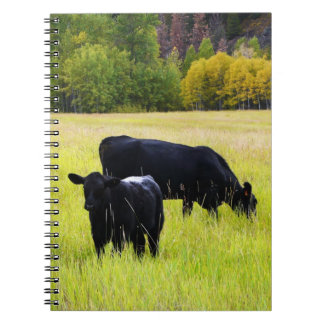 Black Angus Cattle Grazing in Yellow Grass Field Notebook