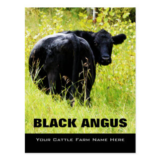 Black Angus Steer -  Add Your Cattle Ranch Name Postcard