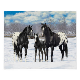 Black Appaloosa Horses In Snow Poster