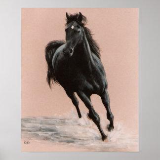 Black Arabian Horse print