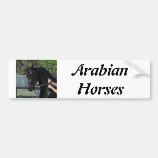 Black Arabian Sport Horse in Hand Bumper Sticker