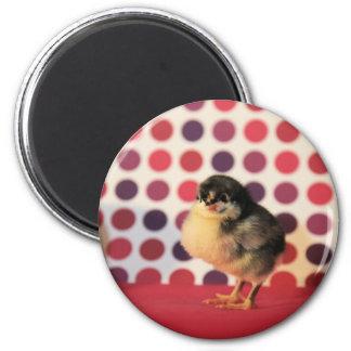 Black Astralorp Chick 2 Inch Round Magnet