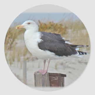 Black Backed Gull Seagull Series Classic Round Sticker
