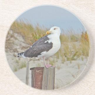 Black Backed Gull Shore Bird Coaster