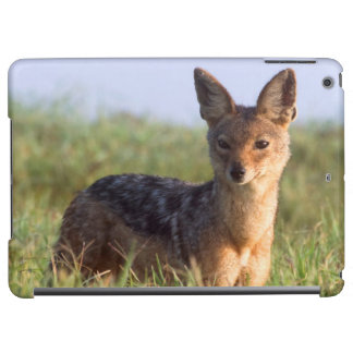 Black-Backed Jackal, Ngorongoro Conservation Cover For iPad Air