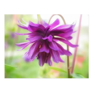 Black Barlow Columbine Postcard