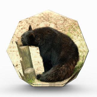 Black Bear (Alabama, Louisiana, New Mexico)