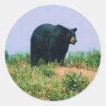 black bear classic round sticker