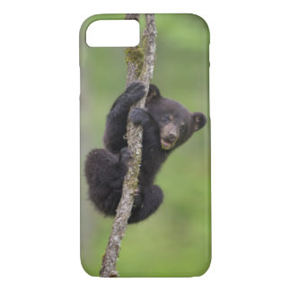 Black bear cub playing, Tennessee iPhone 7 Case