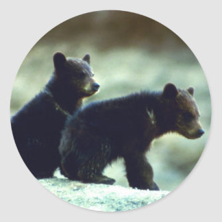 Black Bear cubs Round Sticker