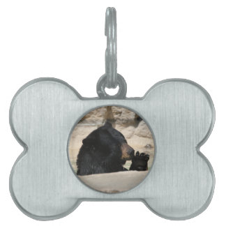 Black Bear enjoying a cool dip Pet Tag