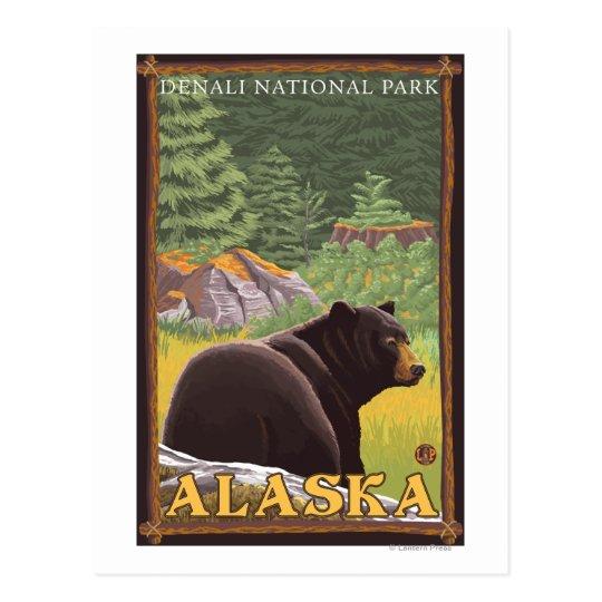 Black Bear in Forest - Denali National Park, Postcard