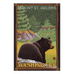 Black Bear in Forest - Mount St. Helens, WA Poster