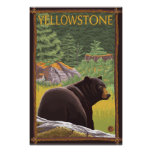 Black Bear in Forest - Yellowstone National Park