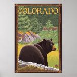 Black Bear in ForestColorado Posters