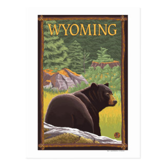 Black Bear in ForestWyoming Postcard