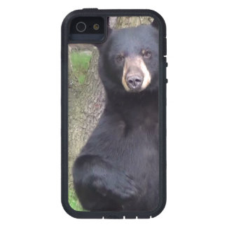 Black Bear iPhone 5 Covers