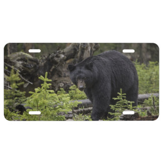 Black bear license plate