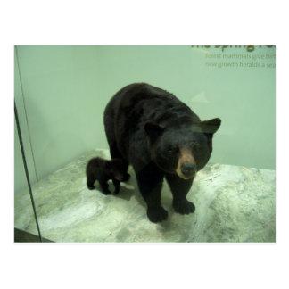 Black bear mom and cub postcard